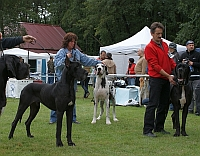 CHOOSING OF BEST OF MALE (CACIB) - (ELVIS FROM LONG NECK, RE-A and FLY TO SUCCESS CLAUDIA BOHEMICA)