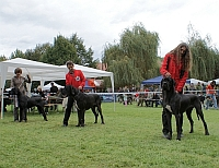CHOOSING OF BEST OF BREED (SENT HADRIAN ESTON, FLY TO SUCCESS CLAUDIA BOHEMICA and CREME DE LA CREME OF AUSTRIA GREAT STARS)