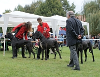 CHOOSING OF BEST OF BREED (CREME DE LA CREME OF AUSTRIA GREAT STARS and FLY TO SUCCESS CLAUDIA BOHEMICA)