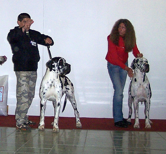 CHOOSING OF BEST OF BREED (ARWENA Z ROSICZKOWYCH BAGIEN and NILUSPARTI JULIE MON COEUR)